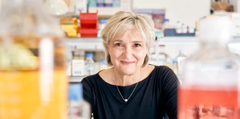 Basler Forscher entwickeln universelle Krebstherapie